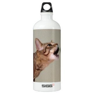 Gato que come el árbol de navidad botella de agua