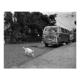 Gato que cruza la calle