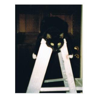 Gato que cuelga alrededor postales