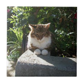 Gato que descansa sobre una pared azulejo