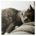 Gato que duerme en el sofá (tono de la sepia de B& Azulejos Cerámicos