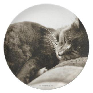 Gato que duerme en el sofá (tono de la sepia de platos de comidas