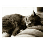 Gato que duerme en el sofá (tono de la sepia de postales