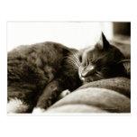Gato que duerme en el sofá (tono de la sepia de postal
