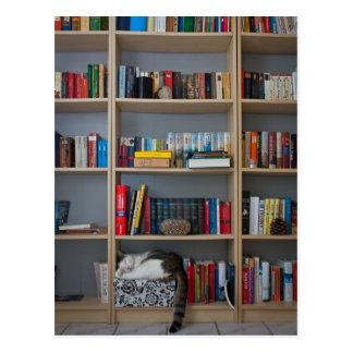 Gato que duerme en libros de la biblioteca del postales