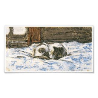 Gato que duerme en una cama de Claude Monet Fotografía