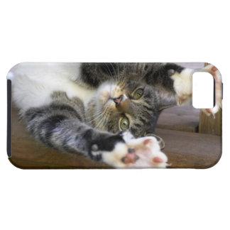 Gato que estira, dentro funda para iPhone 5 tough