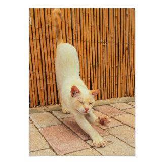 Gato que estira la invitación invitación 12,7 x 17,8 cm
