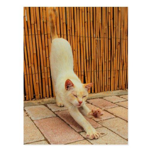 Gato que estira la postal