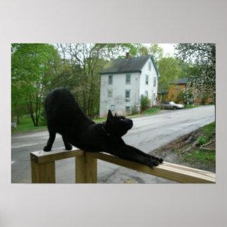 Gato que hace el poster de la yoga de la mañana