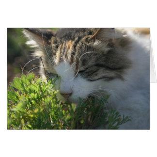 Gato que huele una planta tarjeta de felicitación