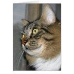 Gato que le busca tarjeta de nota