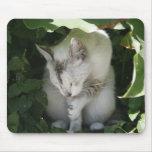 Gato que limpia su pata Mousepad Alfombrillas De Ratón