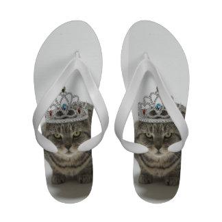 Gato que lleva una tiara