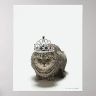 Gato que lleva una tiara póster