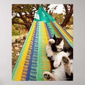 Gato que miente en hamaca mexicana maya póster