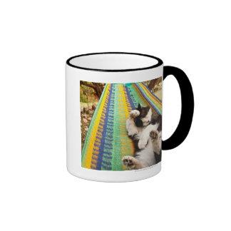 Gato que miente en hamaca mexicana maya tazas