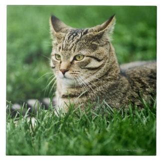 Gato que miente en hierba azulejo cuadrado grande