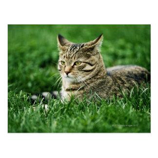 Gato que miente en hierba postal