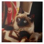 Gato que mira a escondidas a través del edredón teja