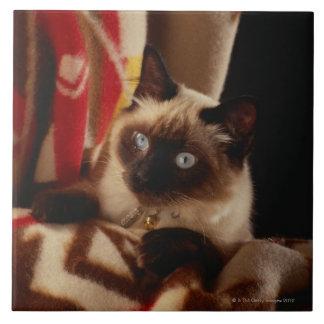 Gato que mira a escondidas a través del edredón azulejo cuadrado grande