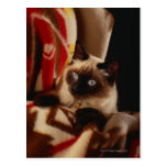 Gato que mira a escondidas a través del edredón tarjetas postales