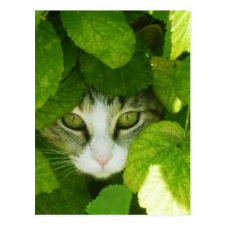 gato que mira a escondidas de las plantas postal