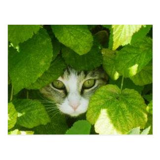 gato que mira a escondidas de las plantas tarjetas postales