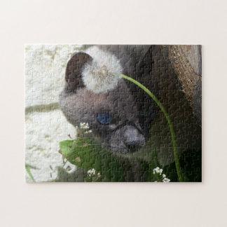Gato que mira a escondidas rompecabezas