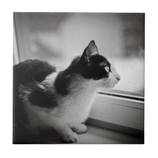 Gato que mira afuera azulejo cuadrado pequeño