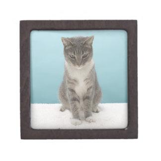 Gato que mira el ratón del juguete en la manta cajas de joyas de calidad