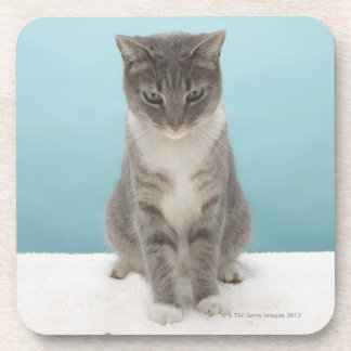 Gato que mira el ratón del juguete en la manta posavasos