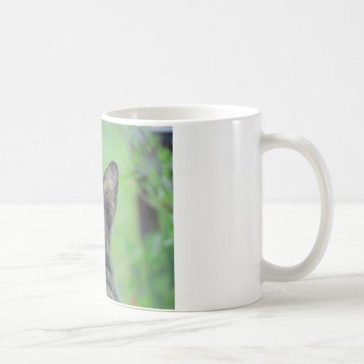 Gato que mira encendido taza de café