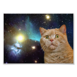 Gato que mira fijamente el universo cojinete