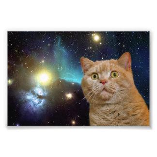 Gato que mira fijamente el universo fotografía