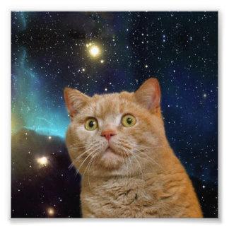 Gato que mira fijamente el universo fotografías