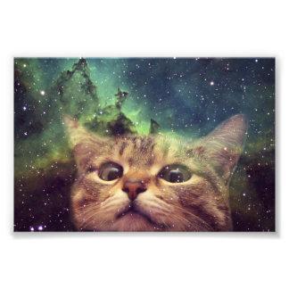 Gato que mira fijamente en espacio cojinete