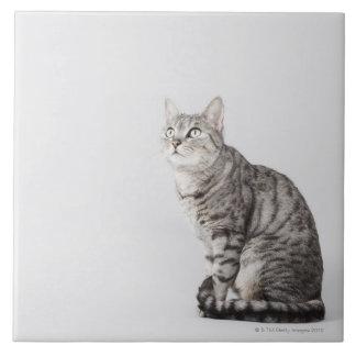 Gato que mira para arriba azulejo cuadrado grande