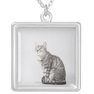Gato que mira para arriba collar plateado