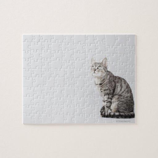 Gato que mira para arriba rompecabeza con fotos