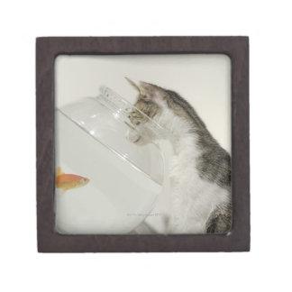 Gato que mira pescados en fishbowl caja de regalo de calidad
