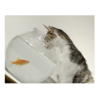 Gato que mira pescados en fishbowl postales