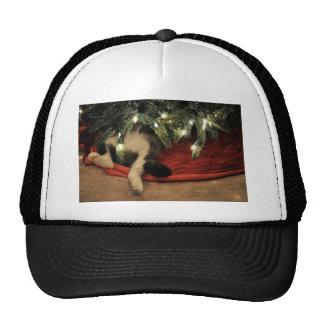 Gato que oculta debajo del árbol de navidad gorro de camionero