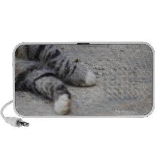 Gato que pone en la acera iPod altavoces
