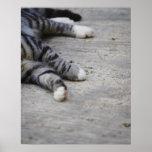 Gato que pone en la acera póster