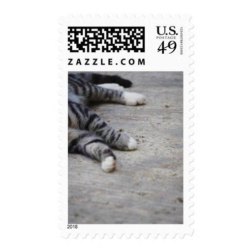 Gato que pone en la acera sellos