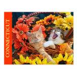 Gato que ruge, gatitos en amor, cesta del gatito postal