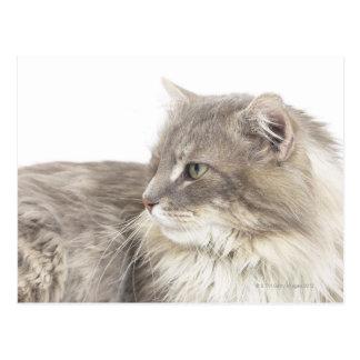 Gato que se acuesta tarjeta postal