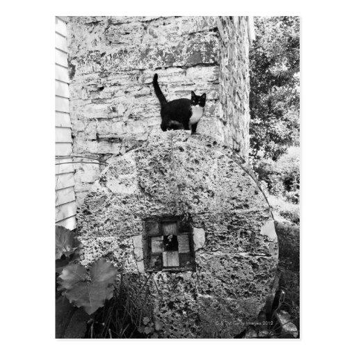 Gato que se coloca en la rueda de piedra vieja postales