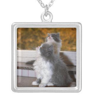 Gato que se incorpora y que mira collar plateado